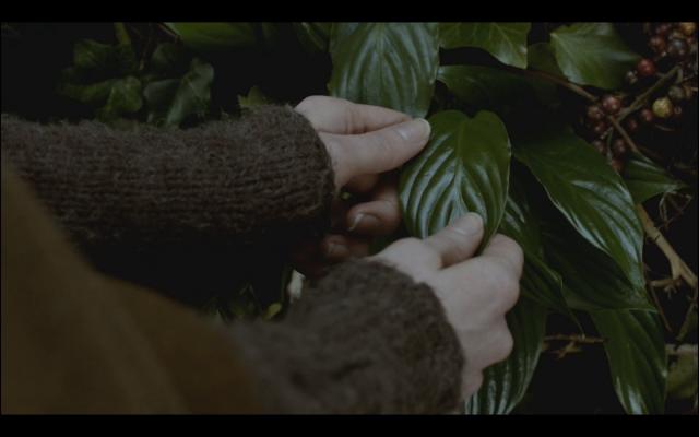black kirk plant 3