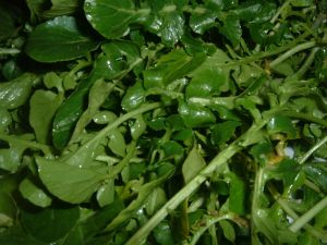 800px-Watercress_(2)